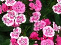 Blooming Beautiful Pinks And W...