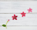 Blooming and budding flowers Royalty Free Stock Photo