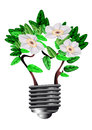 Blooming bulb Stock Image