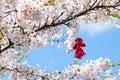 Blooming Cherry Tree In Spring