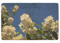 Blooming flower of jasmine. Old postcard Stock Photography