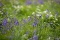 Blooming flowers in the meadow