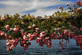Blooming flowers over lake Stock Photo