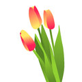 Blooming flowers tulips d vector Stock Photo