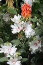 Blooming Garden Flowers