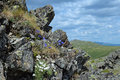 Blooming harebell in northern ural mountains russia campanula rotundifolia a rock on the third bugor mount Stock Photos