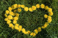 Blooming heart natural love background from dandelion Royalty Free Stock Photos
