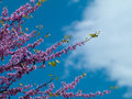 Blooming lilacs beautiful flowering tree lilac on a background of blue a beautiful sky Stock Photography
