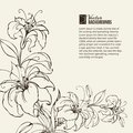 Blooming lilies over sepia background vector illustration Stock Images