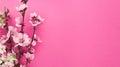 Blooming sakura, spring flowers on pink background Royalty Free Stock Photo