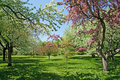 Blooming trees on a green lawn Royalty Free Stock Photo
