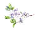 Blooming White Cherry Tree Flo...