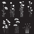 Blooming wild flowers separated on a black background collection for designers Royalty Free Stock Images
