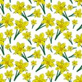Blooming yellow daffodils with green leaves