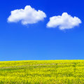 Blooming yellow rapeseed field under blue sky in poland Stock Photos
