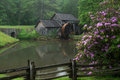 Blooms at mabry mill rhododendron on the blue ridge parkway in virginia Stock Photography