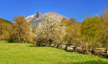 Blossming mountains this is spring blossom in caucasus Stock Images