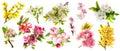 Blossom apple tree cherry twig pear almond forsythia Set spring Royalty Free Stock Photo