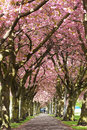 Blossom Avenue, Edinburgh Royalty Free Stock Images