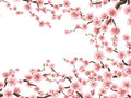 Blossom branches of pink sakura. EPS 10