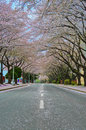 Blossom covered street. Royalty Free Stock Photo