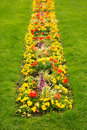 Blossom flowerbed in the lawn Royalty Free Stock Photo