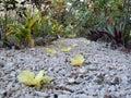 Blossom on a pebble path leads to bungalows lénakel tanna island vanuatu Stock Photo