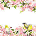 Blossom pink sakura flowers and song birds. Floral card or blank. Watercolor Royalty Free Stock Photo