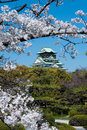 Through the blossom trees, Japanese castlein Osaka Stock Photo