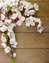 Blossom on wood spring background Royalty Free Stock Photography