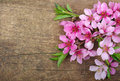 Blossom on wood spring background Royalty Free Stock Photo