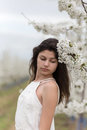 Blossomed cherry tree and beautiful girl Royalty Free Stock Photo
