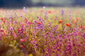 Blossomed meadows in the spring Royalty Free Stock Photo