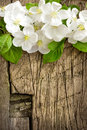 Blossoming branch over vintage wood Stock Photo
