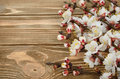 Blossoming branches on a wooden background Royalty Free Stock Image