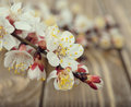 Blossoming branches on a wooden background Royalty Free Stock Photo