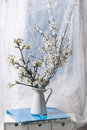 Blossoming cherry branches interior with in white vase Royalty Free Stock Photo