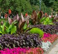 Blossoming colorful flowerbeds in summer city park in Riga