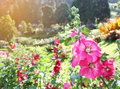 Blossoming colorful flowerbeds in summer