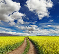 Blossoming field landscape with and road Royalty Free Stock Images