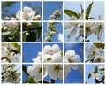 Blossoming fruiters Royalty Free Stock Photo
