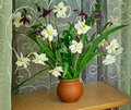 Blossoming narcissuses in a vase on a table beautiful large flowers of Royalty Free Stock Image