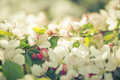 Blossoming new leaves and flowers in faded pastel tone Royalty Free Stock Photo