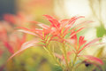 Blossoming new leaves and flowers in faded saturated pastel tone Royalty Free Stock Photo