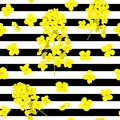 Blossoming Rapeseed flowers seamless vector pattern on striped black and white background. Summer print. For textile. Royalty Free Stock Photo