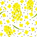 Blossoming Rapeseed, flowers, seeds, leaf seamless pattern isolated. Canola or colza. Brassica napus. Yellow blooming Royalty Free Stock Photo