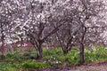 Blossoming Spring Garden Stock Photography