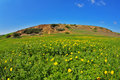Blossoming spring plain-grass, camomiles and hills Royalty Free Stock Image