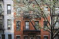 Blossoming tree apartment building manhattan new york city near an old Royalty Free Stock Photography
