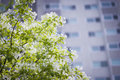 Blossoming Tree With Apartment...